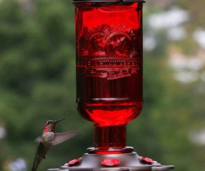 Glass Hummingbird Feeder: $9.00 (was $19.99)