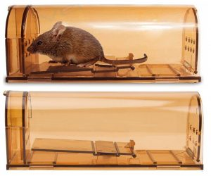 Pack of Two Humane Mouse Traps: $6.99 (was $13.99)