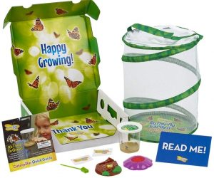 Insect Lore Butterfly Garden with Live Cup of Caterpillars: $19.08 (was$28.49)